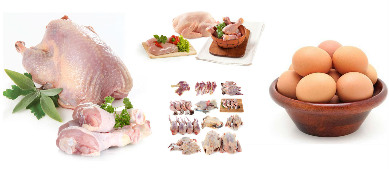 Meat & Poultry Food