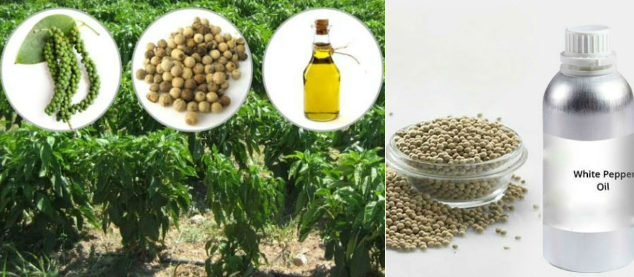 White Pepper Oil